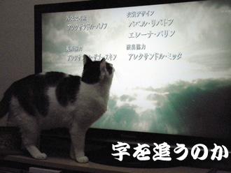 2011.1.6_2.jpg