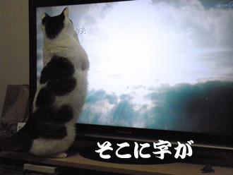 2011.1.6_3.jpg